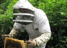 Профессия пчеловод: обязанности, важные качества, где учиться – «Моё призвание»