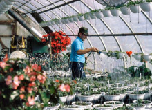 Профессия садовник: обязанности, важные качества, где учиться – «Моё призвание»