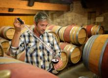 Профессия винодел: обязанности, важные качества, где учиться – «Моё призвание»