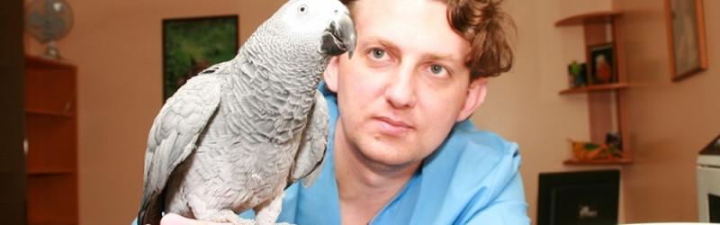 Профессия орнитолог: обязанности, важные качества, где учиться – «Моё призвание»